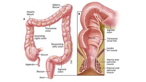 Tìm hiểu rõ hơn về bệnh viêm đại tràng mãn tính