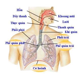 Phòng tránh bệnh viêm đường hô hấp trên